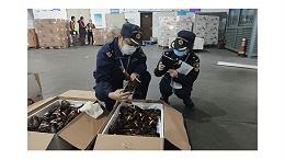 杭州海关助力波士顿龙虾快速进口报关通关