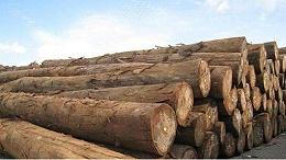 木材进口报关流程、树种知识大全,值得收藏!