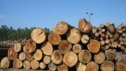 一文带你看懂常见的进口木材种类都有哪些?