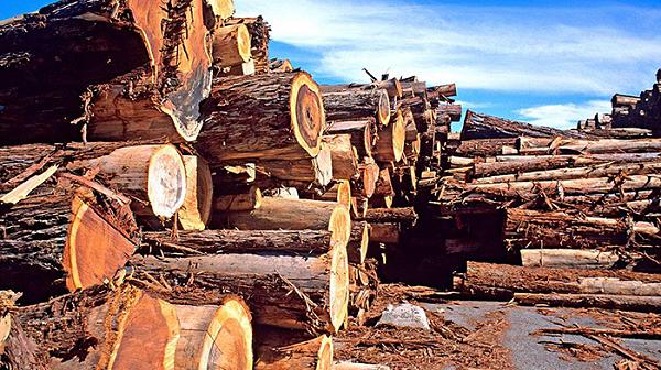 进口木材报关