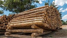 木材进口需要哪些报关流程,你知道么?
