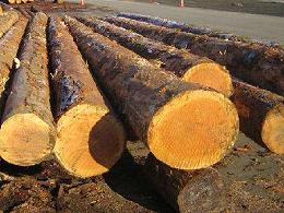 一般贸易下木材进口报关流程是怎样的?