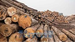 [案例]德国榉木原木成功从广州进口报关