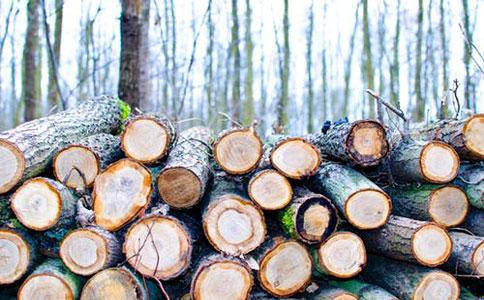白蜡木材进口报关费用