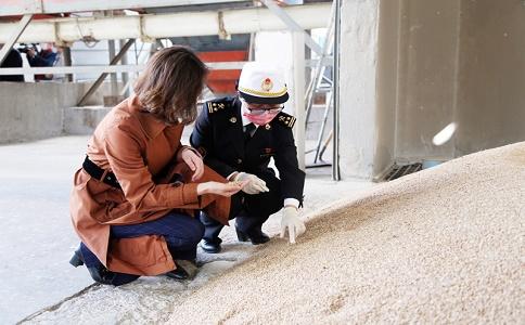 小麦进口报关