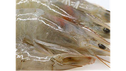 白虾进口广州机场清关监管与检疫条件