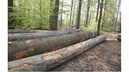 【案例分析】关于原木进口,你知道多少?真实案例